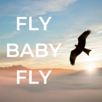 FLY-BABY-FLY-390x267